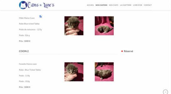 Le site des Coons de Lune's - il y a des chatons trop trop mignons, c'est irrésistible...